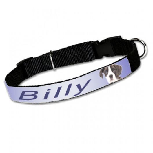 Cat / Small Dog Collar